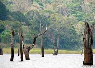periyar-lake-s